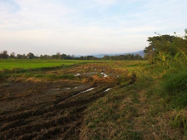 LS001 – Stunning 51.6 Rai Plot of Land in Mae On